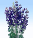 Larkspur_blue.jpg