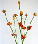 Solanum_orange.jpg