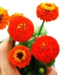 Zinnia_small_orange2.JPG