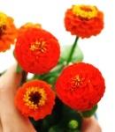 Zinnia_small_orange2.JPG