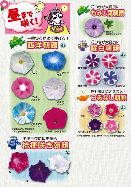asagaoichi_2_449×640.jpg