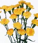 carnation spray yellow.jpg