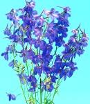 delphinium_beradonna_blue.jpg