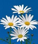 margaret_white.jpg