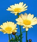 margaret_yellow.jpg