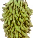 soybeans12_130×150.JPG