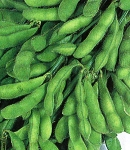 soybeans13_130×150.jpg