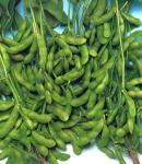soybeans14_130×150.jpg