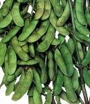 soybeans16_130×150.jpg