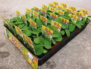 soybeans_case_309×235.JPG