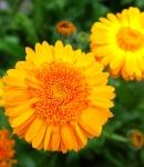 variation_orange.JPG