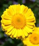 variation_yellow.JPG