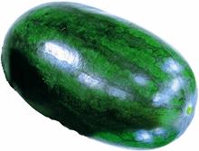 watermelon2_220×167.JPG