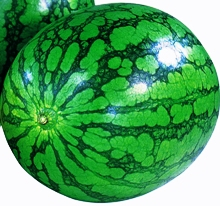 watermelon4_220×206.JPG